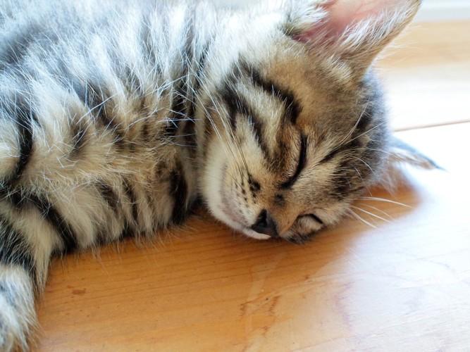 床で眠っている猫