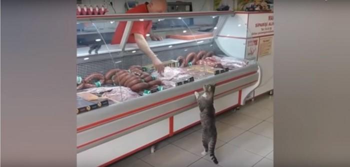 接客をする店主と答える猫
