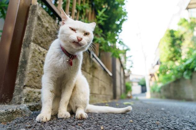 悪そうな白猫