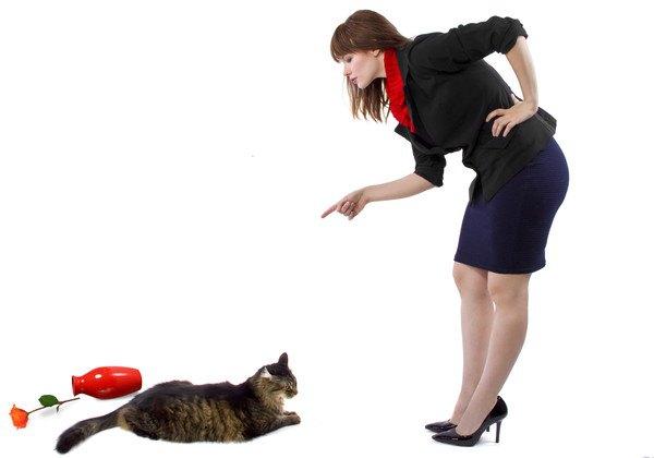 猫にしつけをする飼い主