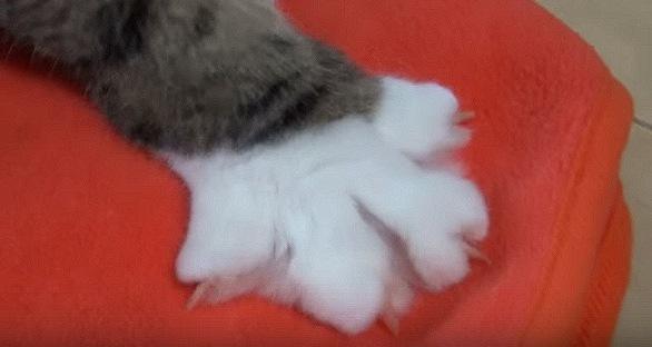手前に引く猫