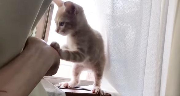 前足でタッチする猫