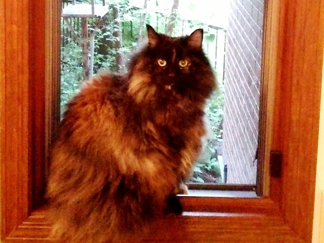 窓際の黒い猫
