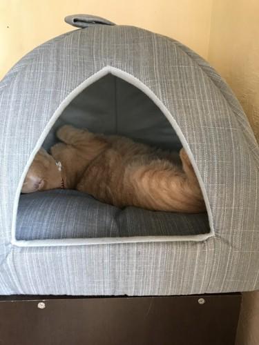 猫がベッドでねている写真