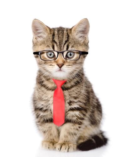眼鏡をかけてネクタイをした子猫