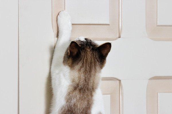 ドアを開けようとする猫