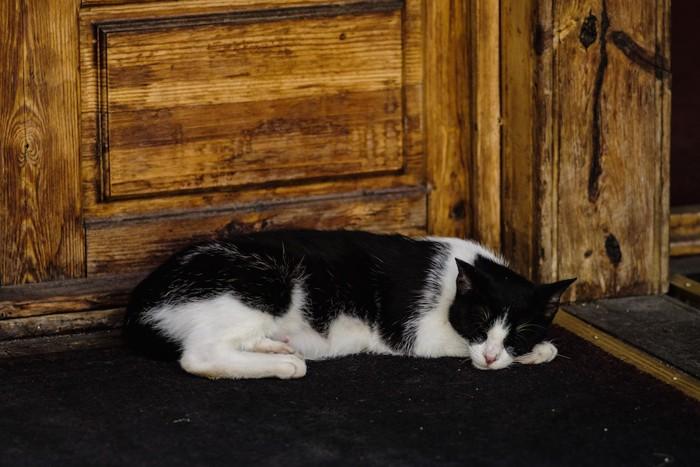扉の前で寝るハチワレ猫