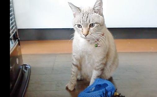 被り物が脱げてすっきりした猫