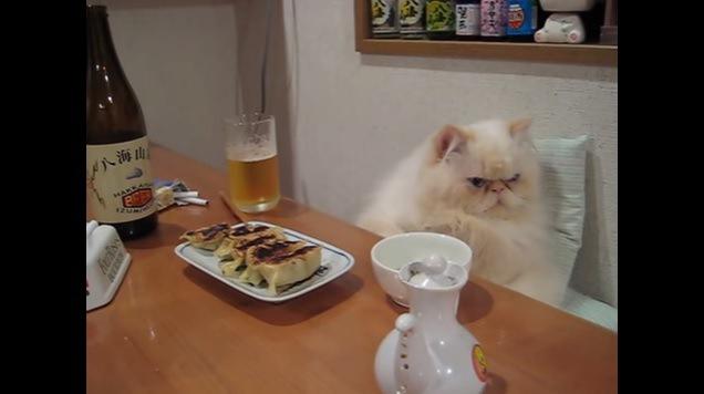 画面右を向く猫