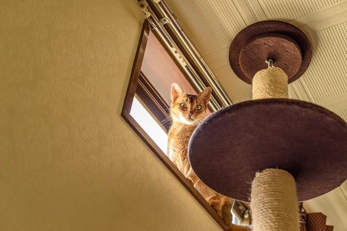 突っ張りタイプのキャットタワーから窓に座る猫
