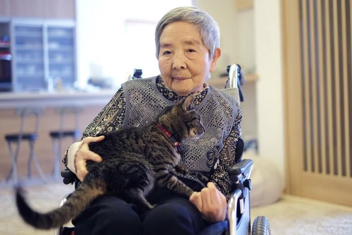 車椅子のおばあさんの膝に乗る猫