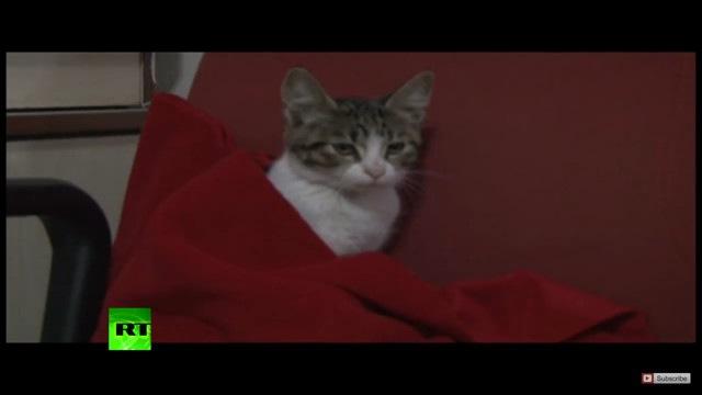 可愛がられる猫
