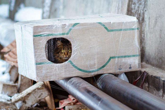 箱の中にいる猫