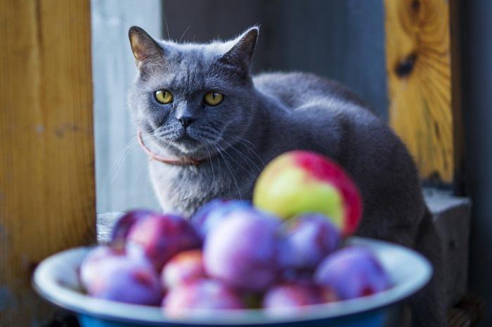 果物を見つめる猫