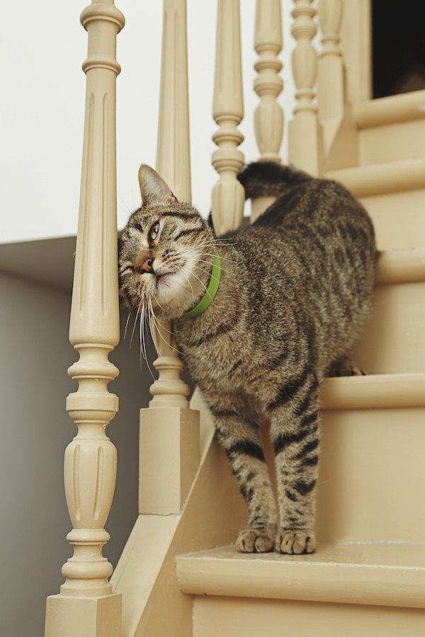 階段の手すりにスリスリする猫