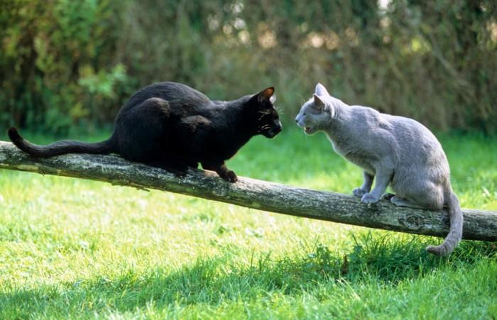 威嚇している猫