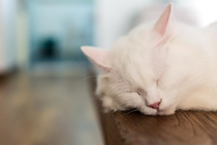 眠る白猫の顔