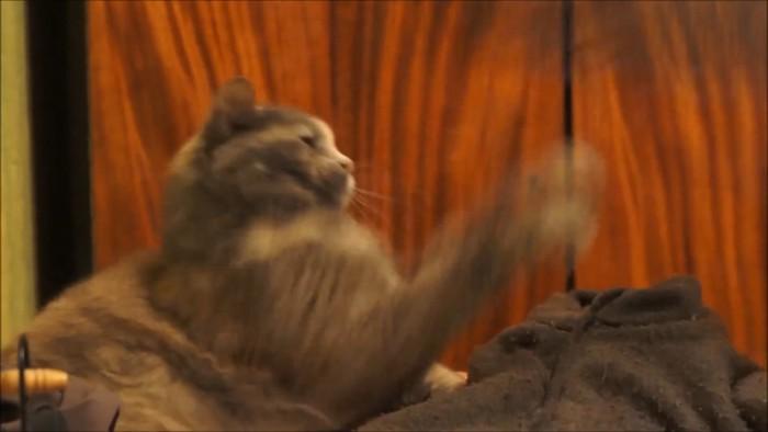 追い払う猫