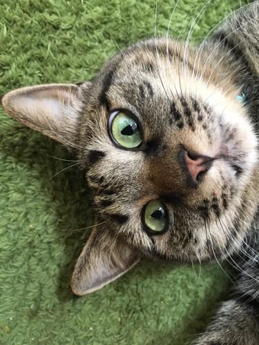 猫の鼻アップ