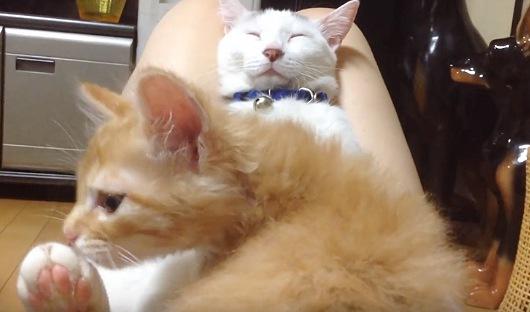 眠る白猫と子猫