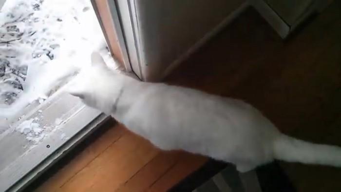雪を見る猫