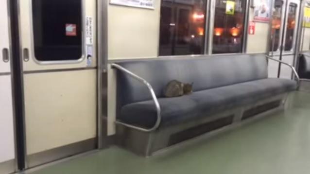 電車内の座席で眠る猫