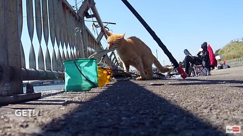 魚を引き上げる猫