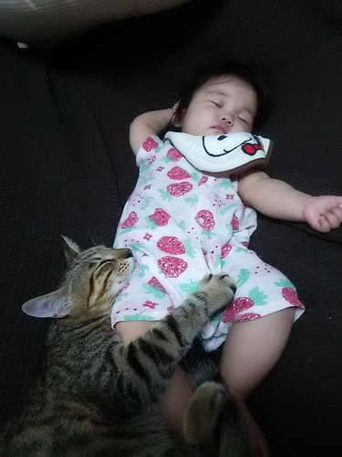 猫と寝る赤ちゃん