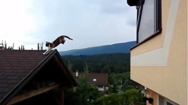屋根に着地する猫