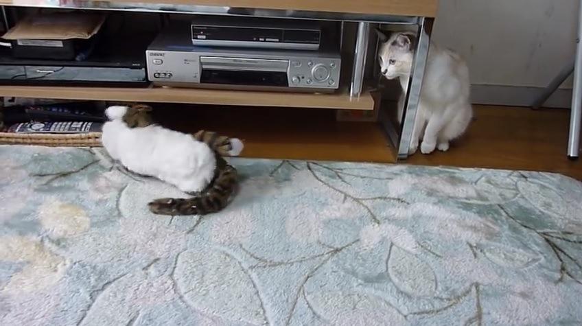 片足を上げてオモチャを見つめる猫