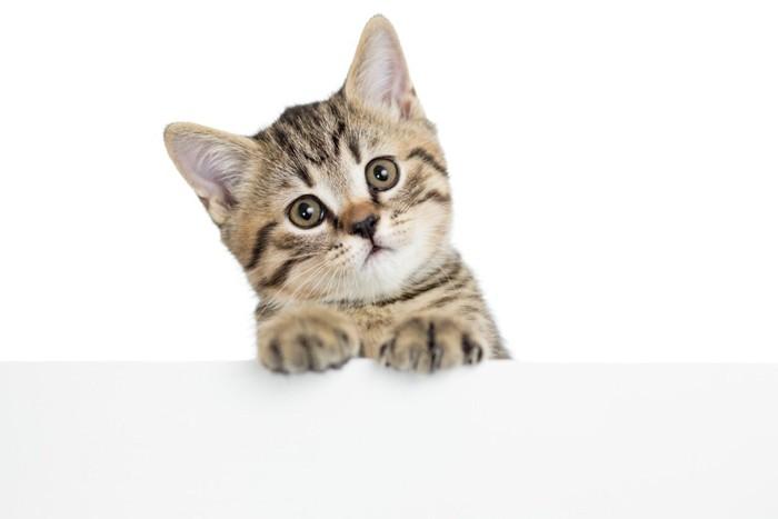 首をかしげる茶色の子猫