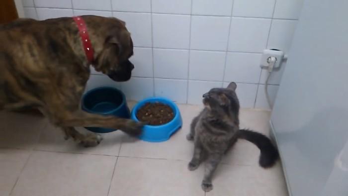 お皿をつつく犬