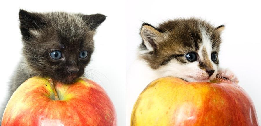 りんごと子猫