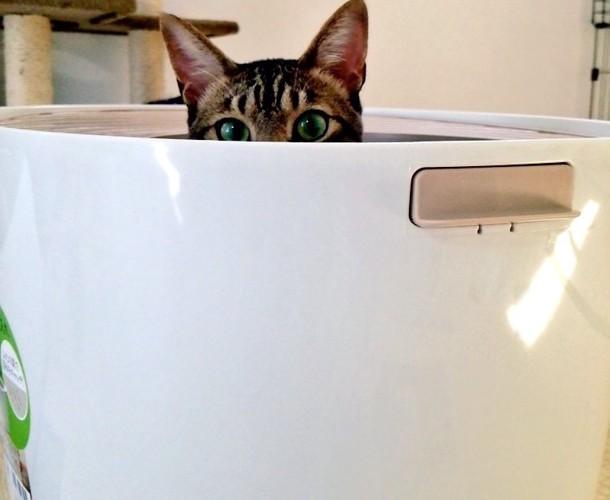 トイレから顔を出す猫ちゃん