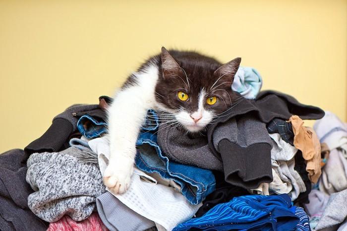 洗濯物の山の上に寝そべる猫