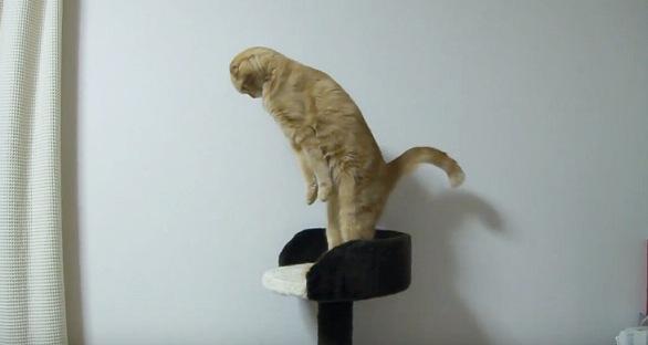 台の上でまた真っ直ぐに伸びる猫