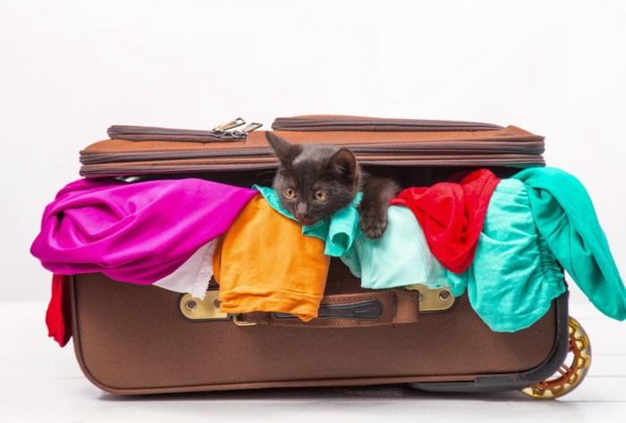 スーツケースと服と猫
