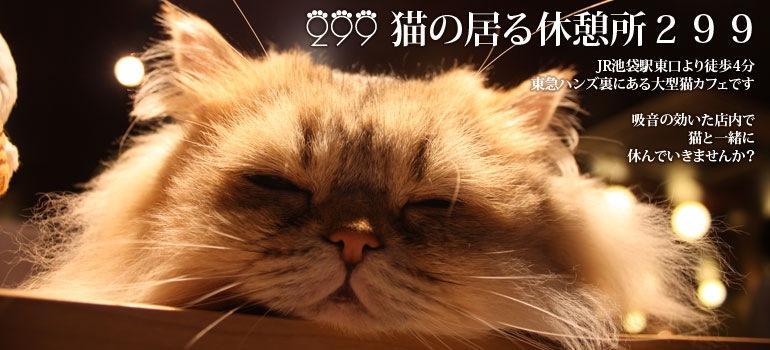猫の居る休憩所299トップ画像