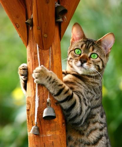 鈴がついた木にしがみついている猫