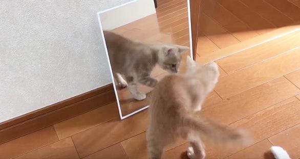 鏡の様子を窺う子猫