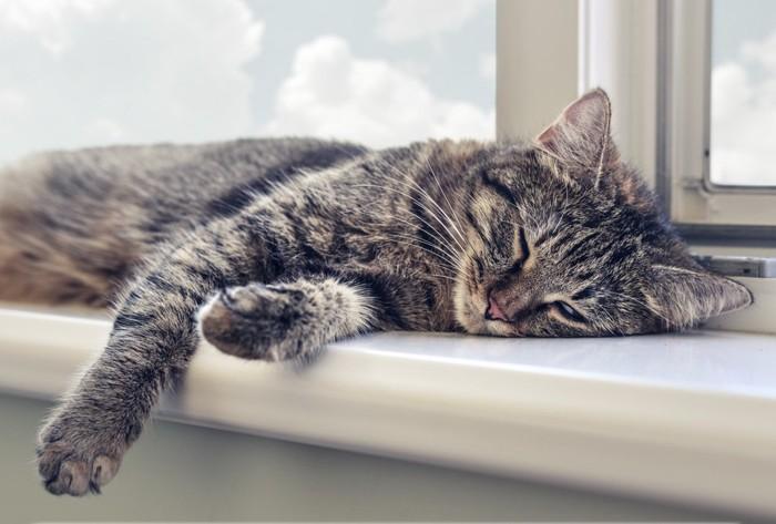 ストレスがありそうな猫