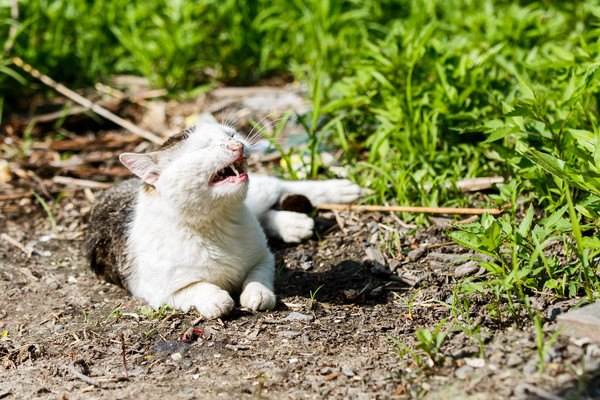 外で鳴く猫