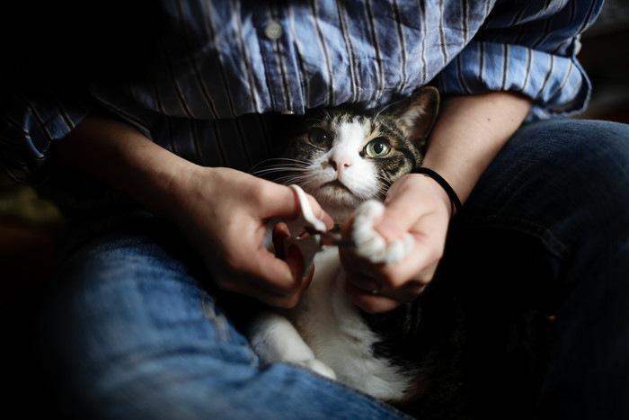 爪切りをしてもらう猫