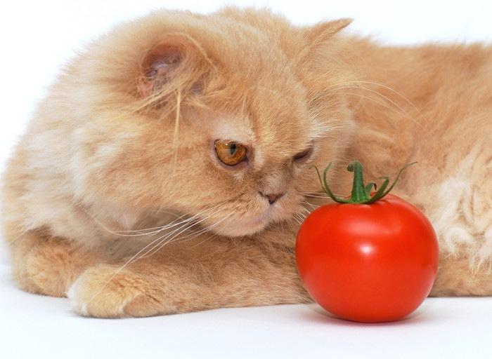 猫とトマト