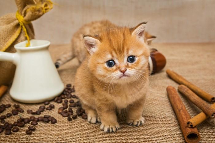 コーヒー豆と子猫