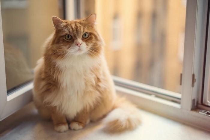 手術後の猫