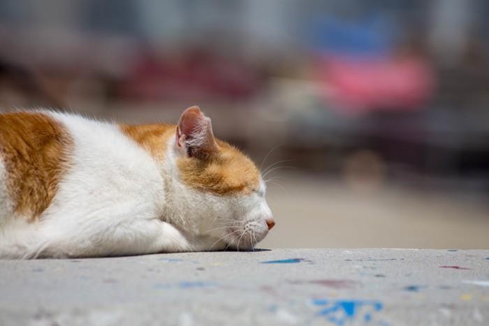 寝そべっている猫