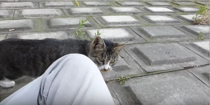 立ち止まりこちらを見る猫