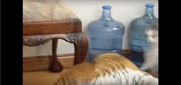 猫パンチでトラを倒す猫