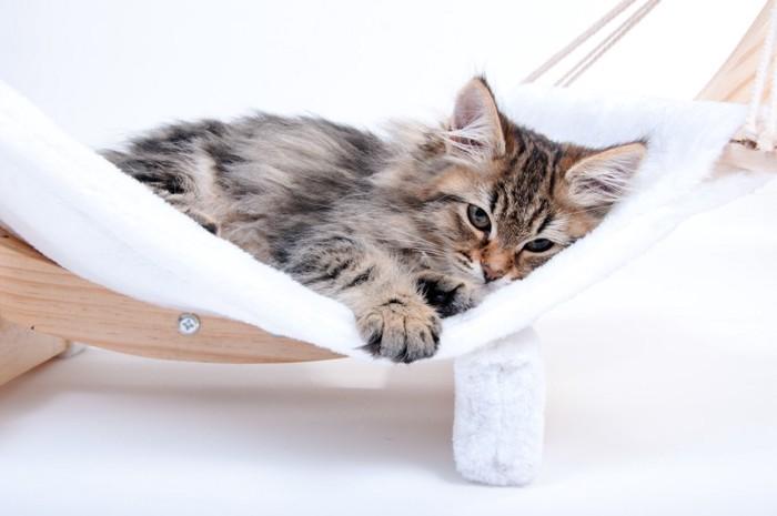 ハンモックで寝ている猫